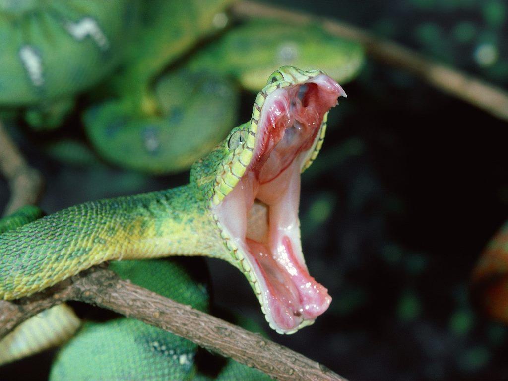 Eerste hulp bij slangenbeet